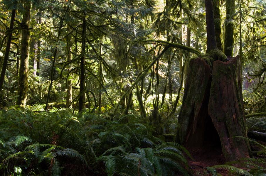 Rainforest et Tofino