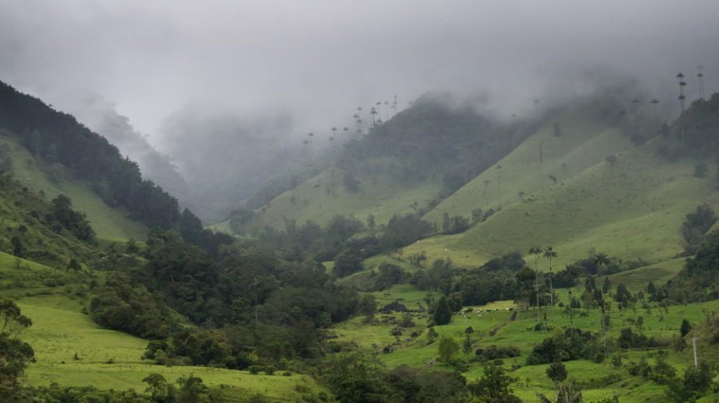 Vallee de Cocora