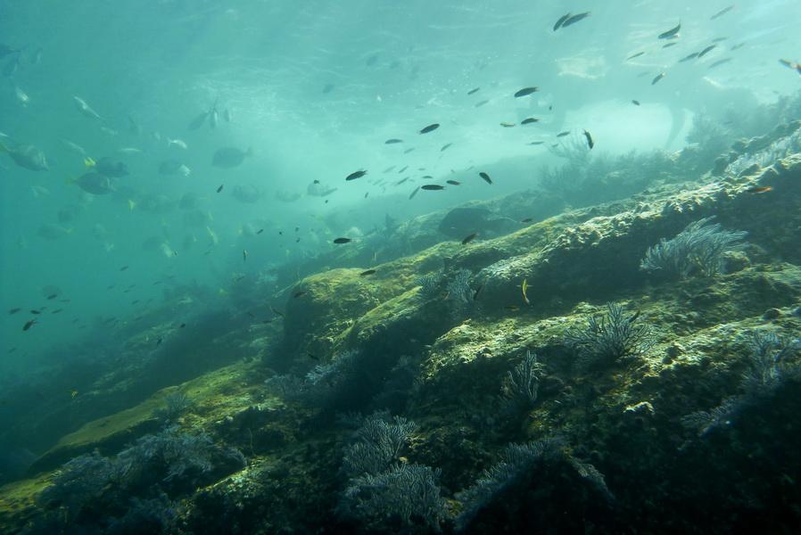 snorkeling a Los Cabos