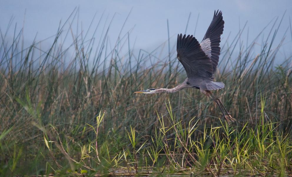Birding @ LAgo de Yogoa