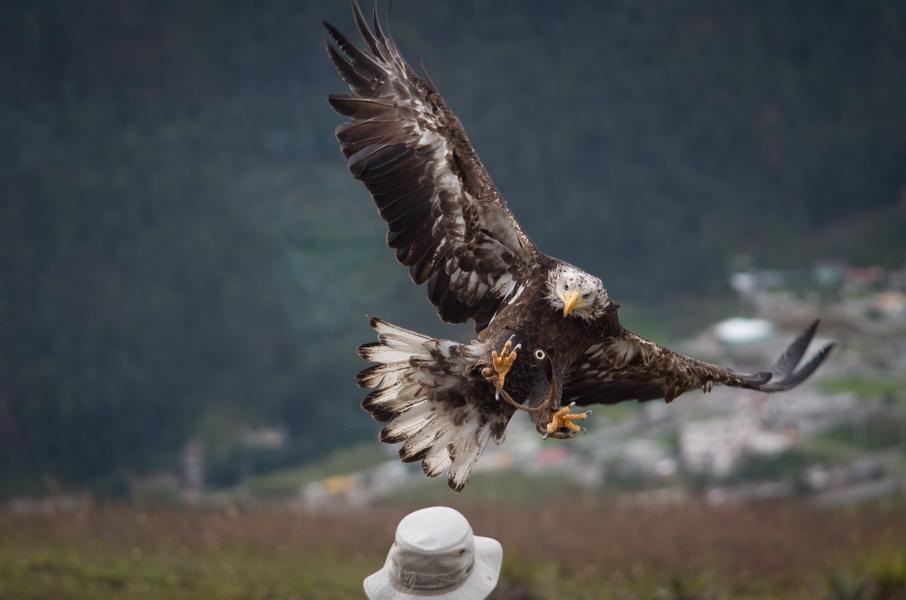 Parque condor, Otavalo