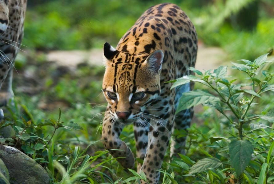 Tarqui refugio 7/7 Wildlife photoshoot