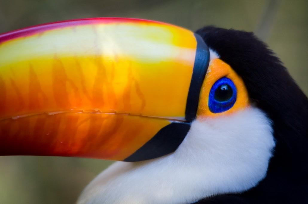 Parque das aves (Brazil)