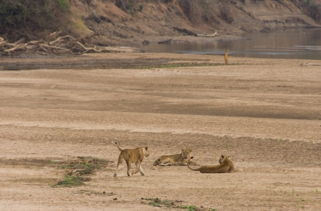 Luangwa national park